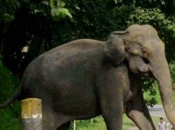 Wild Elephant Entered Anubhavi Subramaniar Temple Coimbatore