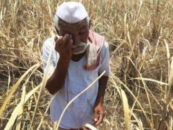 Marathwada On An Avarage Three Farmer Commits Suicide On Day