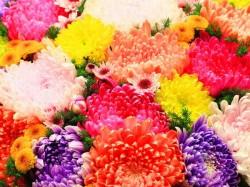 Use Of Flower In Hindu Puja