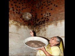 This 74 Year Old Bat Woman Is Not Scared Nipah Virus