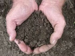 These Remedy Soil Can Solve Your Money Problems