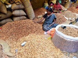 Groundnuts Minimum Support Price Hiked Governmnent