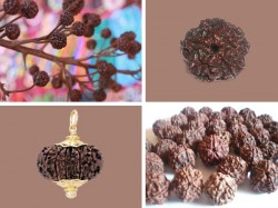 Rudraksha Is Associated With Lord Shiva As His Jewelry Its Benefit Is Told In Shiva Purana