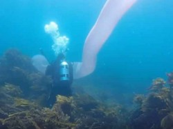 Scuba Divers New Zealand Found Mysterious 26 Foot Long Sea Creature