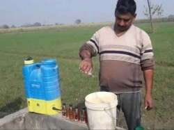 Farmers Using Alcohol To Increase The Production Of Potato In Bulandshahr