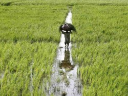 Assam 25 Percent Farmers Loan Will Be Refunded The Farmers