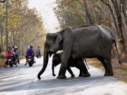 Year Old Fell Foot Elephants Saved An Elephant