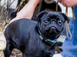 Debt Collector Sells Family S Prized Dog Rs 60k Because Unpaid Bills