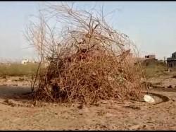 Barmer Peoples Forgot Holika Dahan
