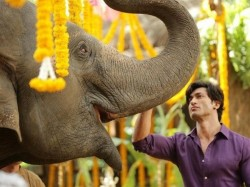 Junglee Movie Review Chuck Russell Whips Up An Action Adventure