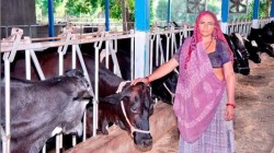 The Women Of The Village Earn 75 Lakhs In A Year By Cows And Cattle