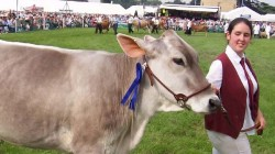 Cow Tourism Center Will Be Developed Across The Country Including Gujarat