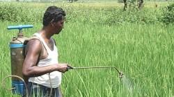 Gujarat Agriculture Department Caught Fake Pesiticide In Test