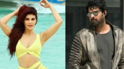 Jacqueline Fernandez Will Be The Part Of Prabhas Upcoming Movie Saaho