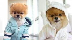 This Instagram Star Dog Earns Rs 10 Lakh Per Post Has More Follower Then Other Celebrity