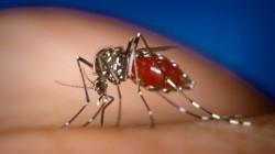 Malaria Confirmed In 7384 Patients This Year In Gujarat