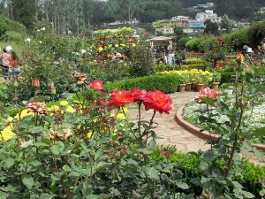 The Lovely Rose Gardens India The Zakir Hussain Rose Garden