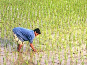 Gujarat Budget 2017 Agriculture Sector Highlights