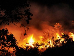 Udaipur Control Jungle Fire Army Join Hands With Navy