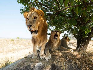 Pride Lions Has Rescued Girl From Her Kidnappers Rural South West Ethiopia