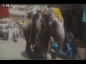 Watch An Elephant Mp Is Fond Eating Paan Betel Leaf