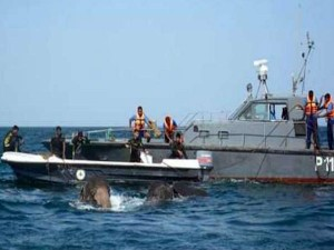 Video How Navy Used Divers Ropes Rescue 2 Elephants Washed Out To Sea