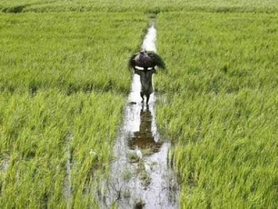 ખેડૂતોના અકસ્માતે મોત પર ગુજરાત સરકાર આપશે બે લાખની સહાય